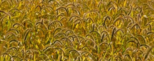 Dense Grass