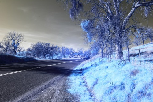 Infared Photography